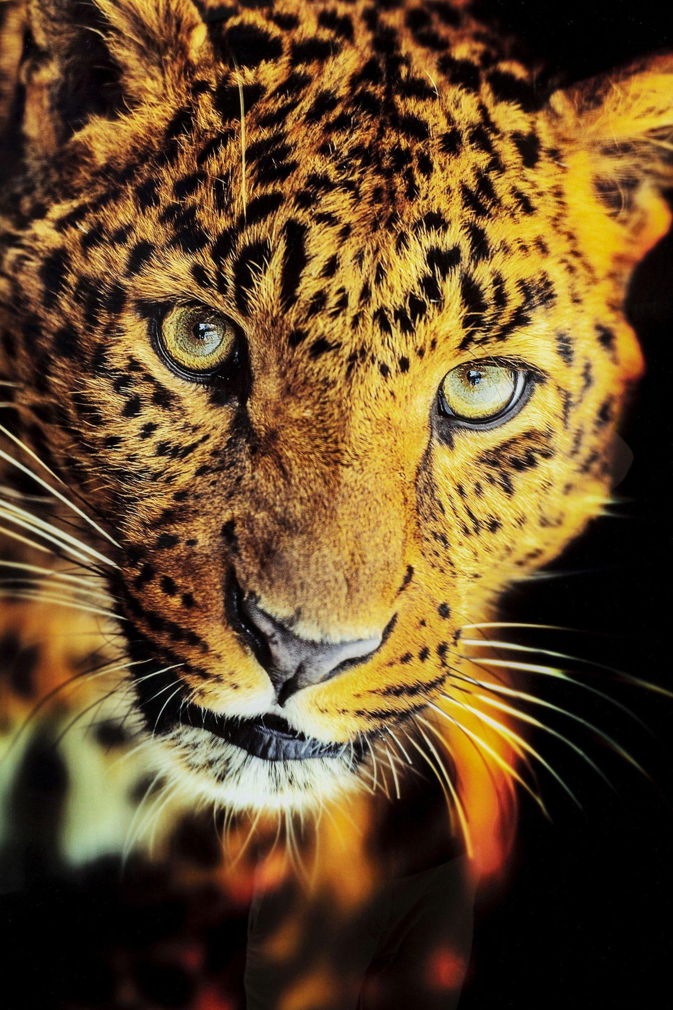 Kare 52598_Bild Glas Leopard 120x80